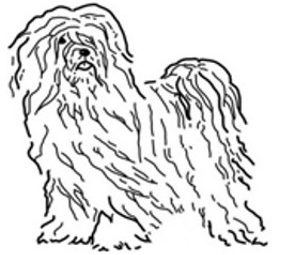 Tibetan Terrier Breeder and Owners Club